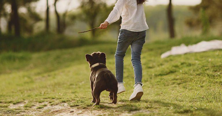 cachorro saudável correndo